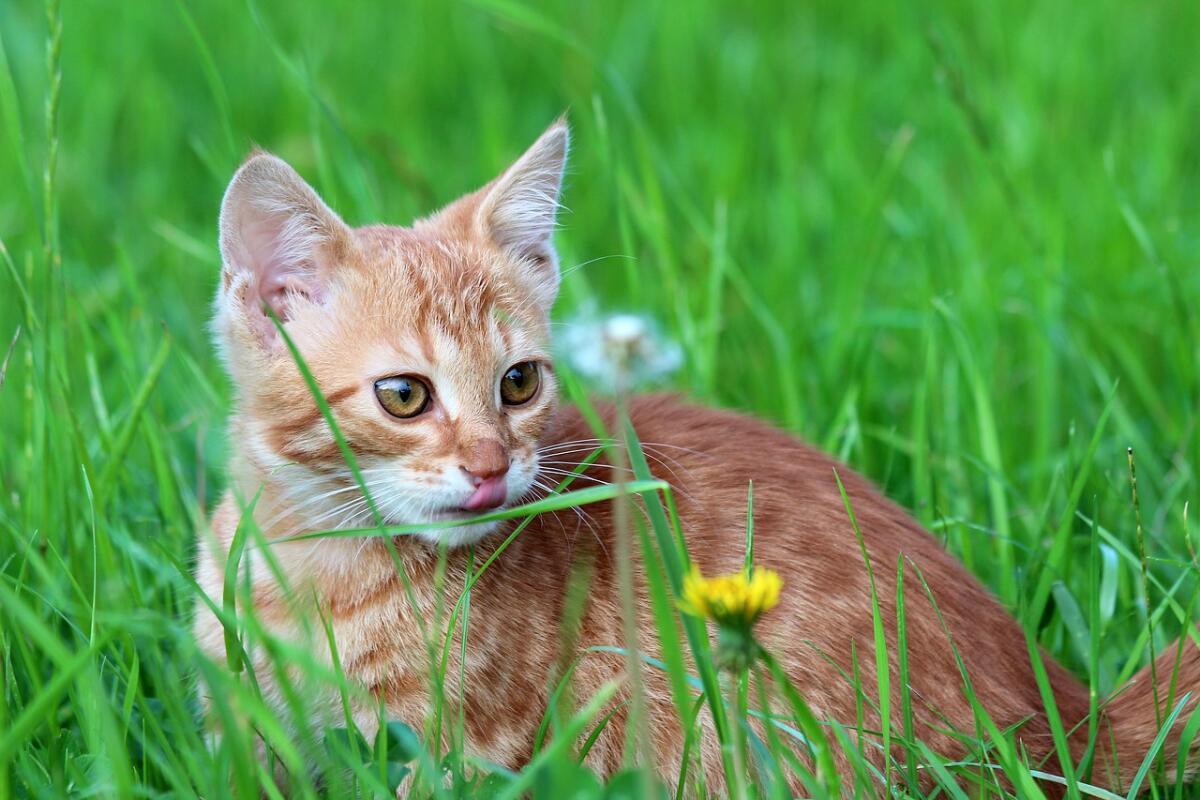 Чем хороши кошки? Ода тем, от кого не дождёшься тапочек