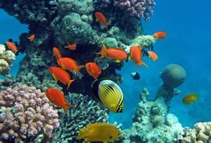 Что общего между офисом и морем? О многообразии планктона