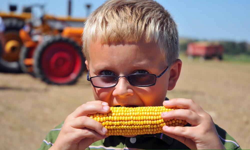 Царица полей – кукуруза. Что мы о ней знаем?