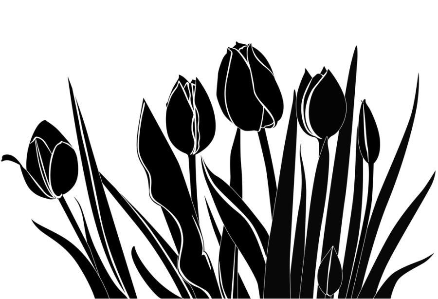 Роман «Черный тюльпан» А. Дюма повествует о«годе бедствий» в Нидерландах