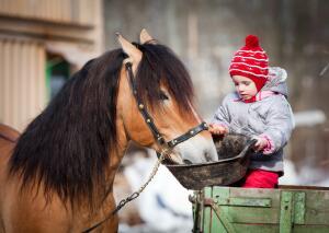 Конь в традиции многих народов почитается как священное животное.