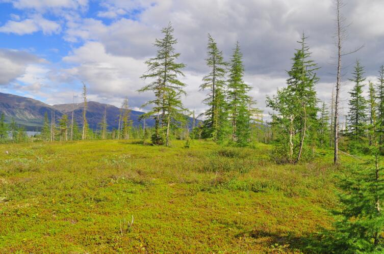 Тундра в предгорьях плато Путорана