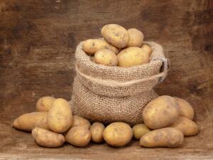 Сколько лет культуре картофеля и как он пришел в наш рацион?