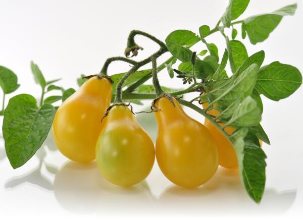 Кто такой Джеймс Бейли и какова его роль в истории помидоров?