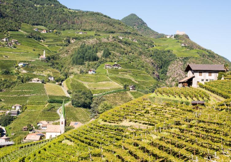 Виноградники в Альпах