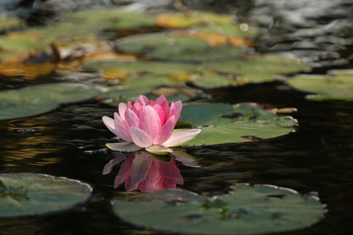 Медитация помогает освободить мозг от дурных мыслей