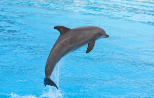 Рекордсмены долгожительства земной фауны обитают в воде. Первый среди них - осётр.