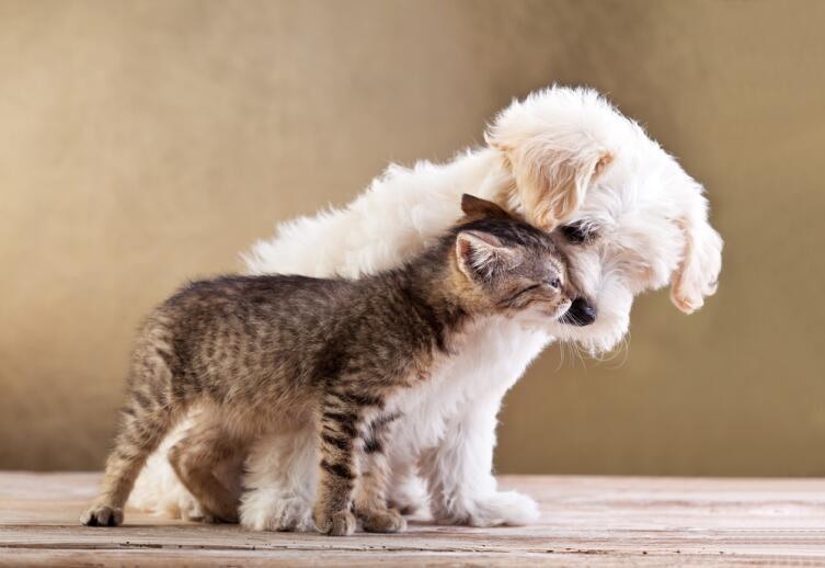 Отчего собаки воют?