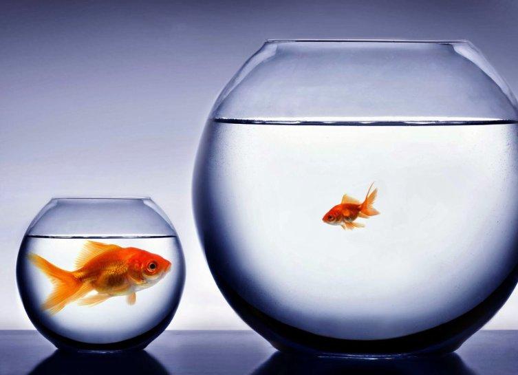 Как распознать завистника в своём окружении?