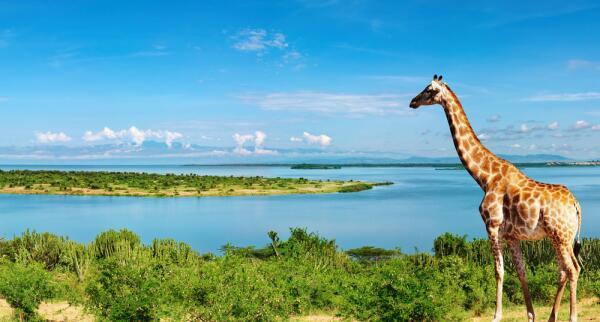 Африка – отсталый континент или колыбель прогресса?
