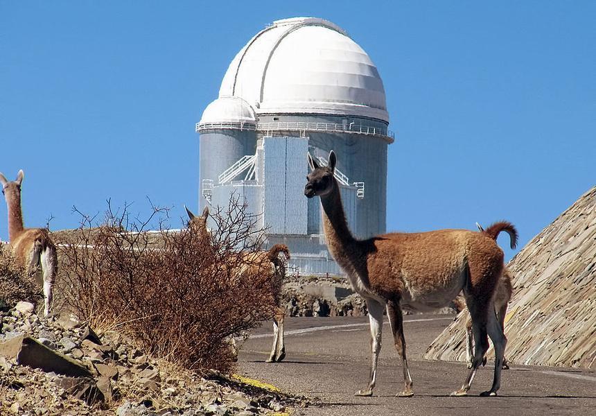 Гуанако возле высокогорной обсерватории, 2400 м над уровнем моря