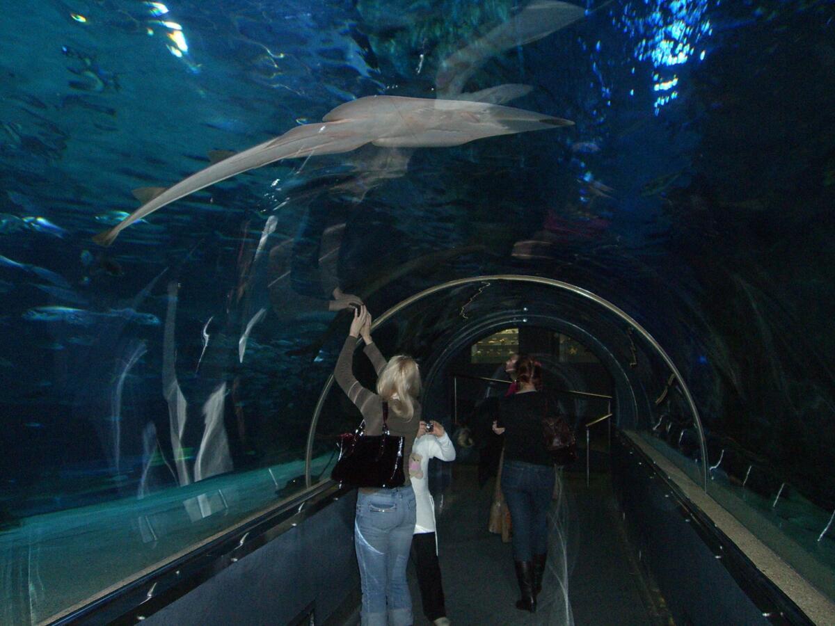Тропикариум-Океанариум. Стеклянный коридор под океанариумом для наблюдений