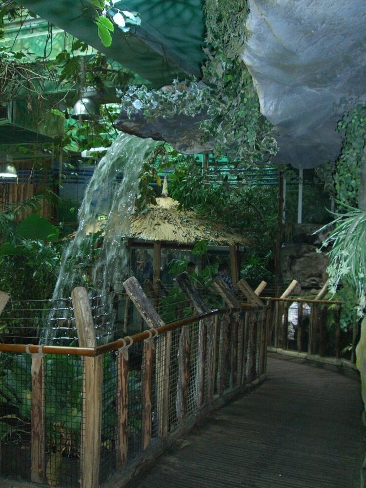 Тропикариум-Океанариум. Тропический лес