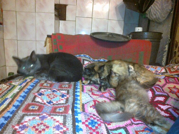 Если после зимних дорог возникает желание поваляться на диване вместе с котами... В этом нет ничего странного!
