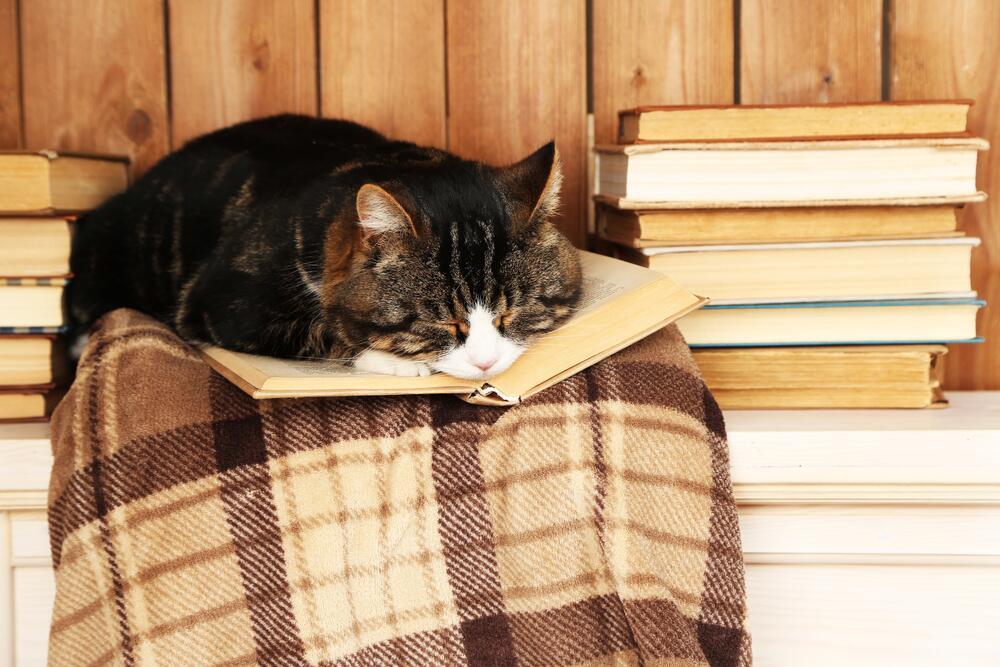 Полигамный читатель одновременно читает несколько книг