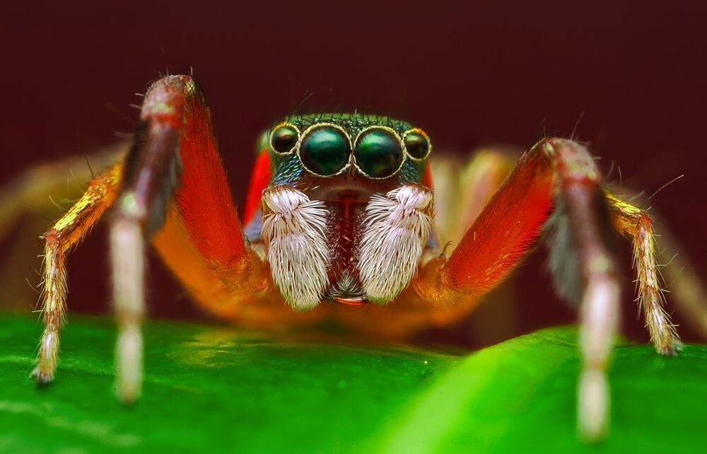 Как помочь ребёнку не бояться пауков? Сказка «Янтарный паучок»