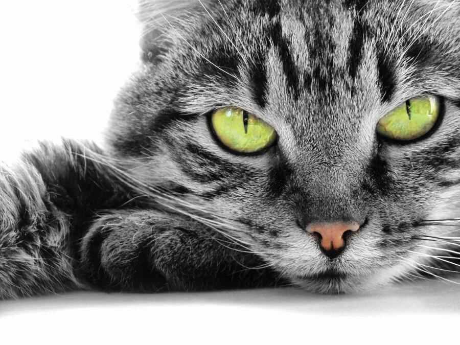Почему кошки линяют