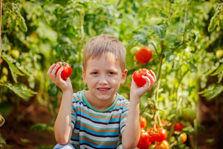 Как приобщить ребёнка к садово-огородным работам? Волшебные помидоры