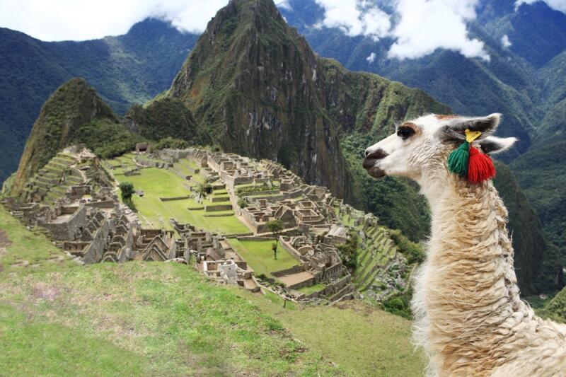 Мачу-Пикчу, древний город инков, и задумчивый символ Перу