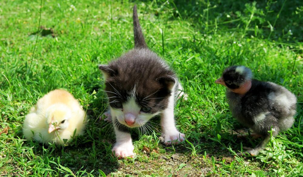 Какие «тараканы» бывают у кошек, собак и других наших домашних?