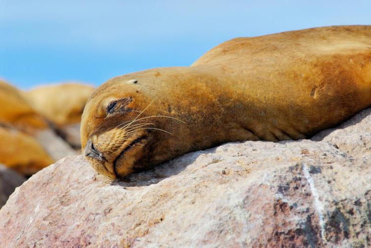 Учёные рекомендуют половину свободного времени отдыхать и лениться