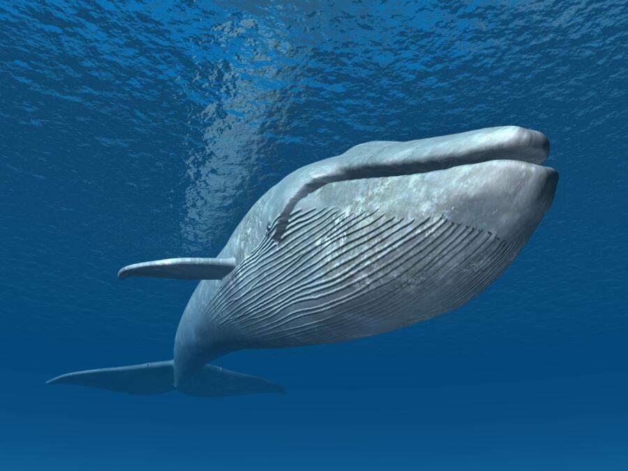 Что такое игра «Синий кит» и как от нее спасти своего ребенка?