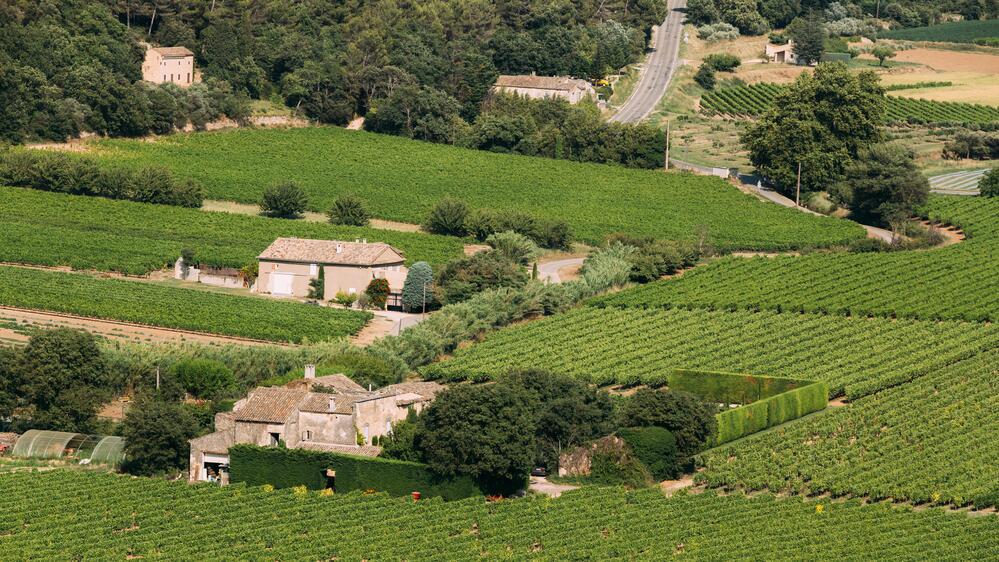 Виноградники на юге Франции. Здесь прошло детство Ипполита Мего-Мурье