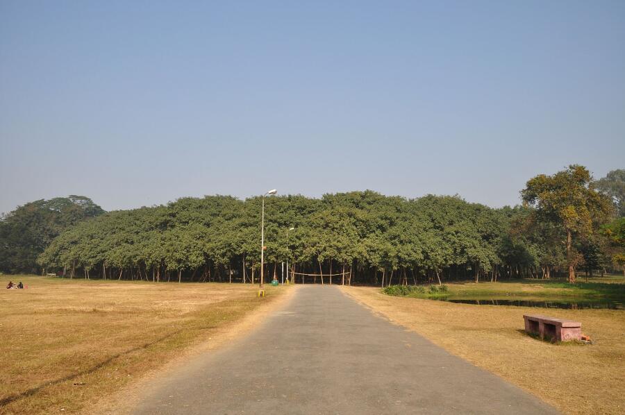 Это не лес, а одно дерево - баньян