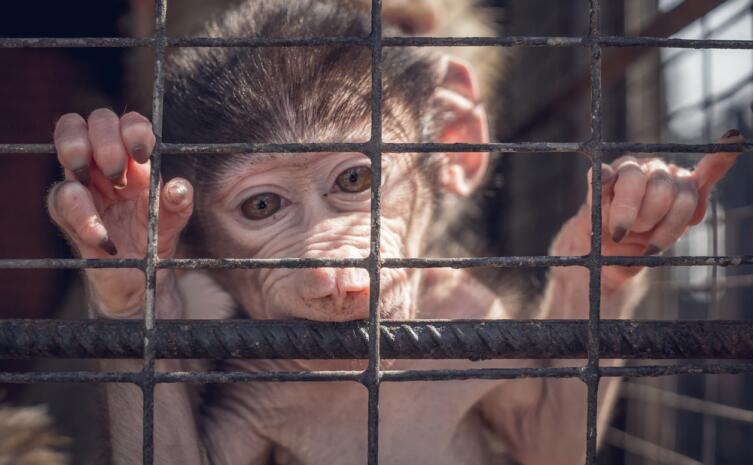Как не стать жертвой мошенников-зоозащитников?