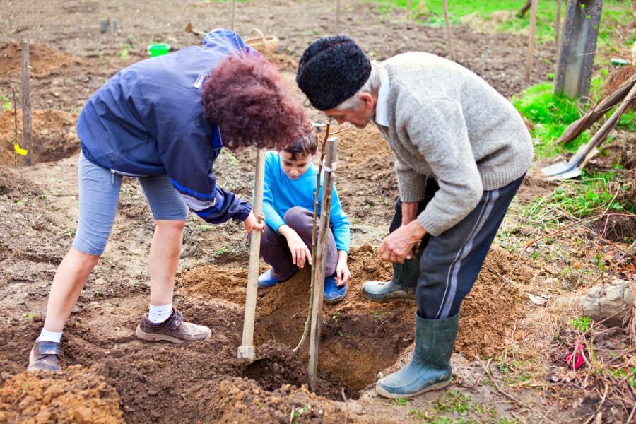 Как и когда правильно сажать плодовые деревья?