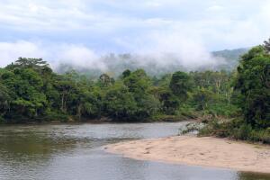 Леса Амазонии - дикие джунгли или культурные плантации?