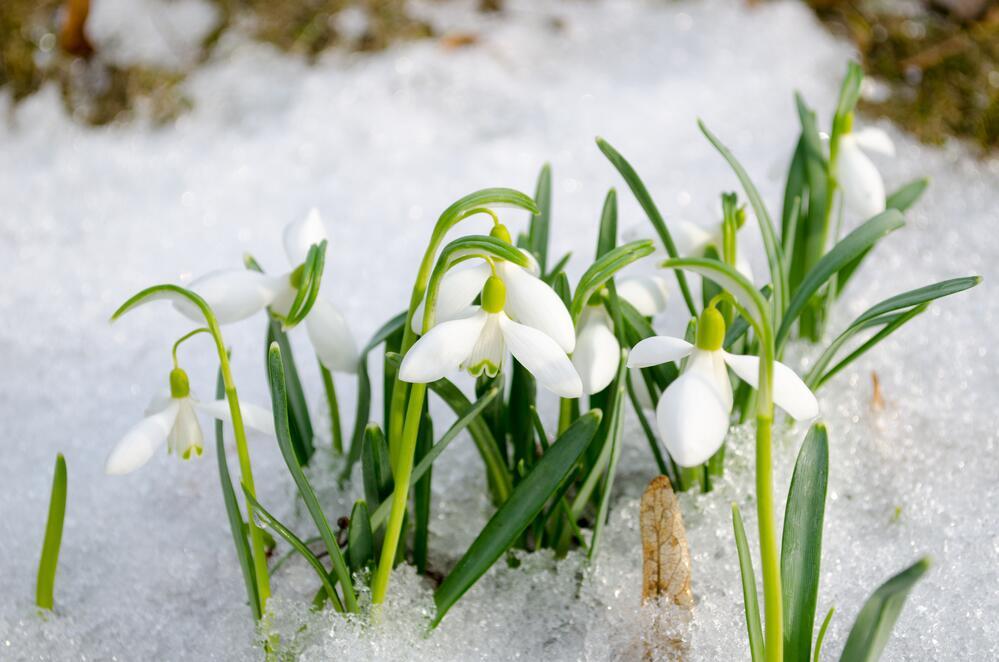 Утро котенок, картинки о начале весны красивые
