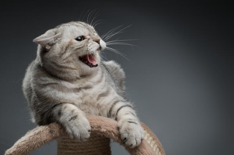 Почему кошка кусается? Причины проявления агрессии у кошек