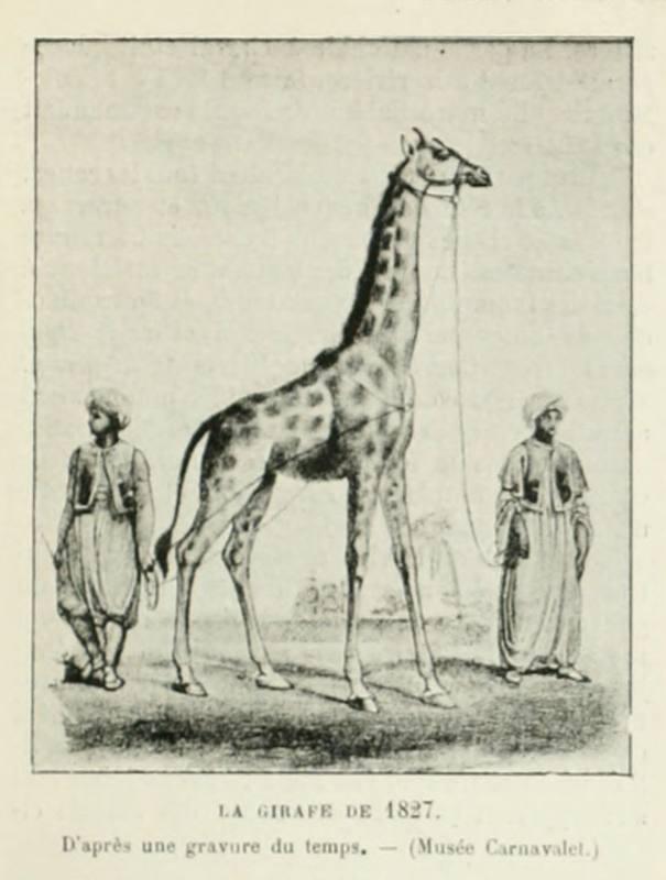 Жираф, присланный в Париж в 1827 году