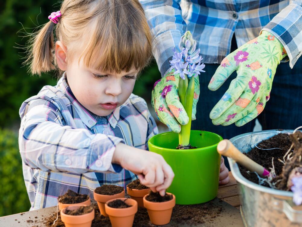 Гиацинт: как вырастить цветок дождя?