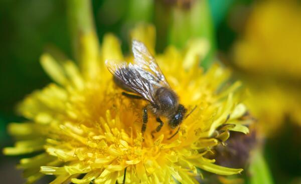 Зачем тебе жужжать, если ты не пчела? Европейская символика образа
