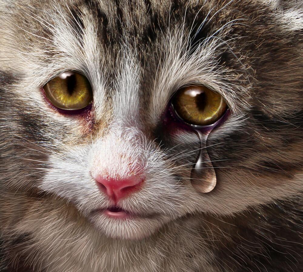 Можно ли дать коту колбасу