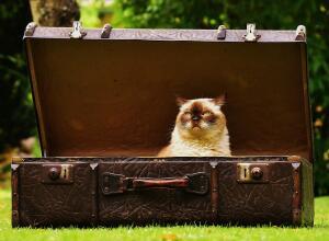 Кошки в интерьере. Как выбрать домик мечты для своего питомца?