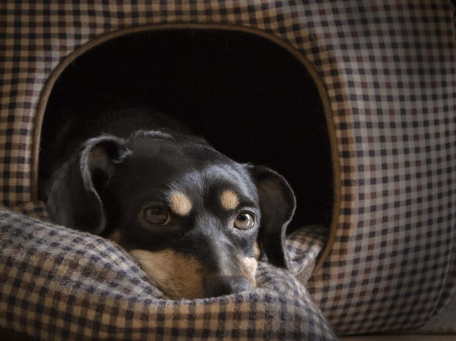 Собаки в интерьере. Как выбрать домик мечты для своего питомца?