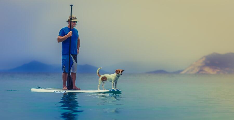 Как собаки помогают людям победить рак?