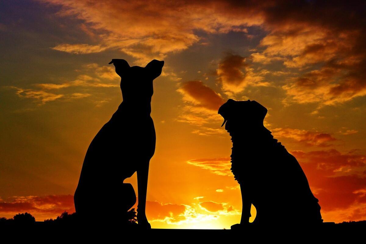 Что вы знаете о собаках?