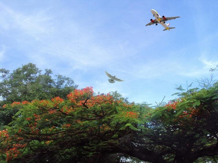 Аэродинамика полета птиц легла в основу конструкции летательных аппаратов