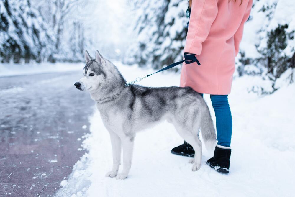 Как гулять с собакой?