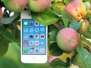 Где заказать быстрый и качественный ремонт техники Apple?