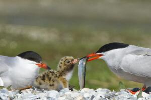 Всемирный день мигрирующих птиц. Как технологии помогают фиксировать рекорды пернатых?