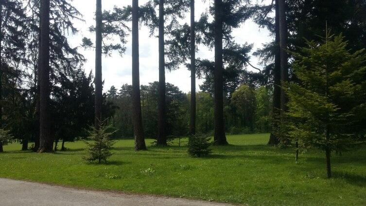 Что представляет из себя знаменитый Венский лес?