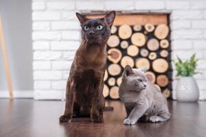 Каким может быть приют для кошек?