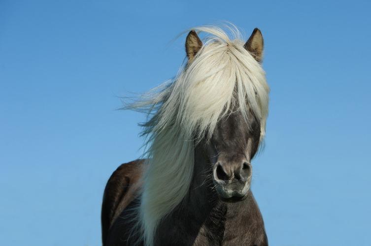 Какого цвета бывают лошади?