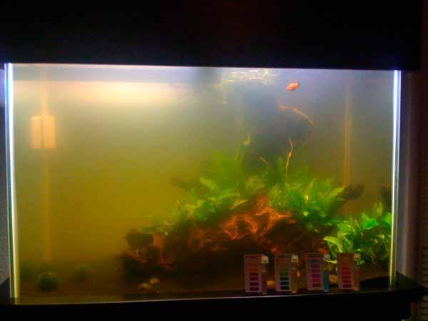 Нужен ли фильтр в аквариуме?