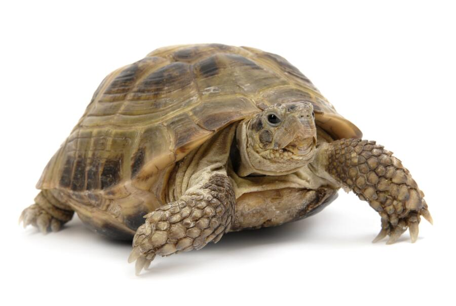 Какими бывают черепахи?